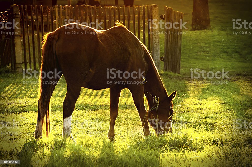 Brown horse in backlit at fall royalty-free stock photo