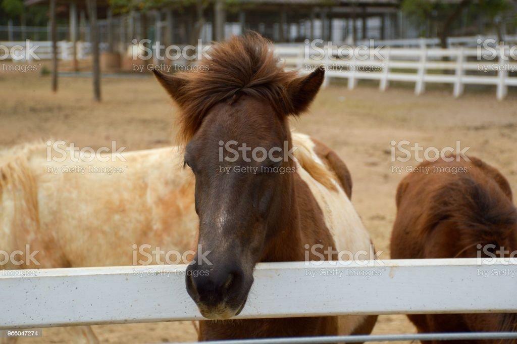 коричневый конь в стране Таиланд - Стоковые фото Без людей роялти-фри