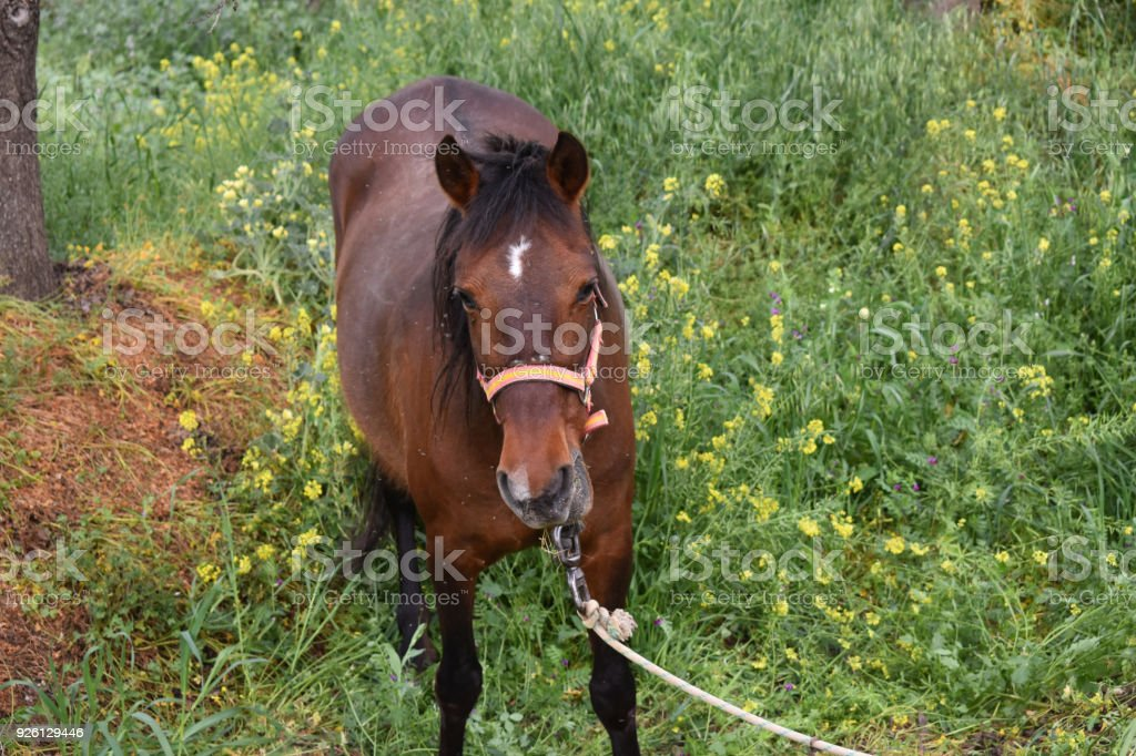 Brown horse in farm stock photo