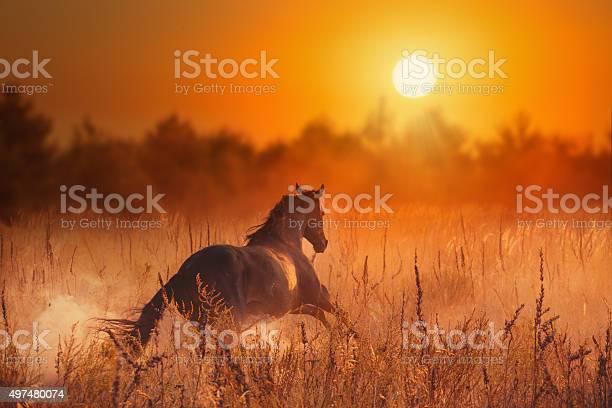 Brown horse in sunset picture id497480074?b=1&k=6&m=497480074&s=612x612&h=81kdspaa2ntmsjxn6exbpanxyylvhiam2jvpalf yqs=