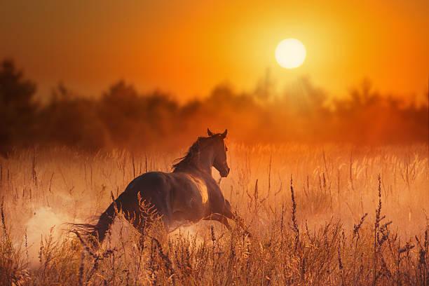 brown horse en puesta de sol - caballo familia del caballo fotografías e imágenes de stock