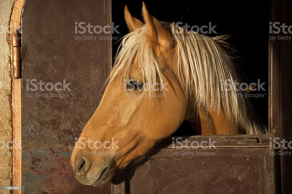 Brown Horse in the Stable royalty-free stock photo