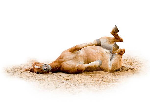 Brown horse joke 3 picture id172655475?b=1&k=6&m=172655475&s=612x612&w=0&h=6s0yakvsyiqji 6sihgdmw08uhajeymirqwzhaekpqe=