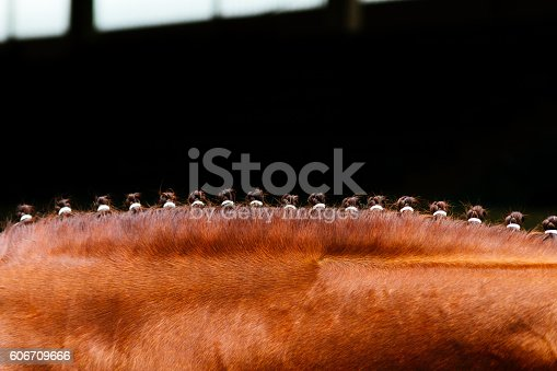Brown horse mane tied with small braids