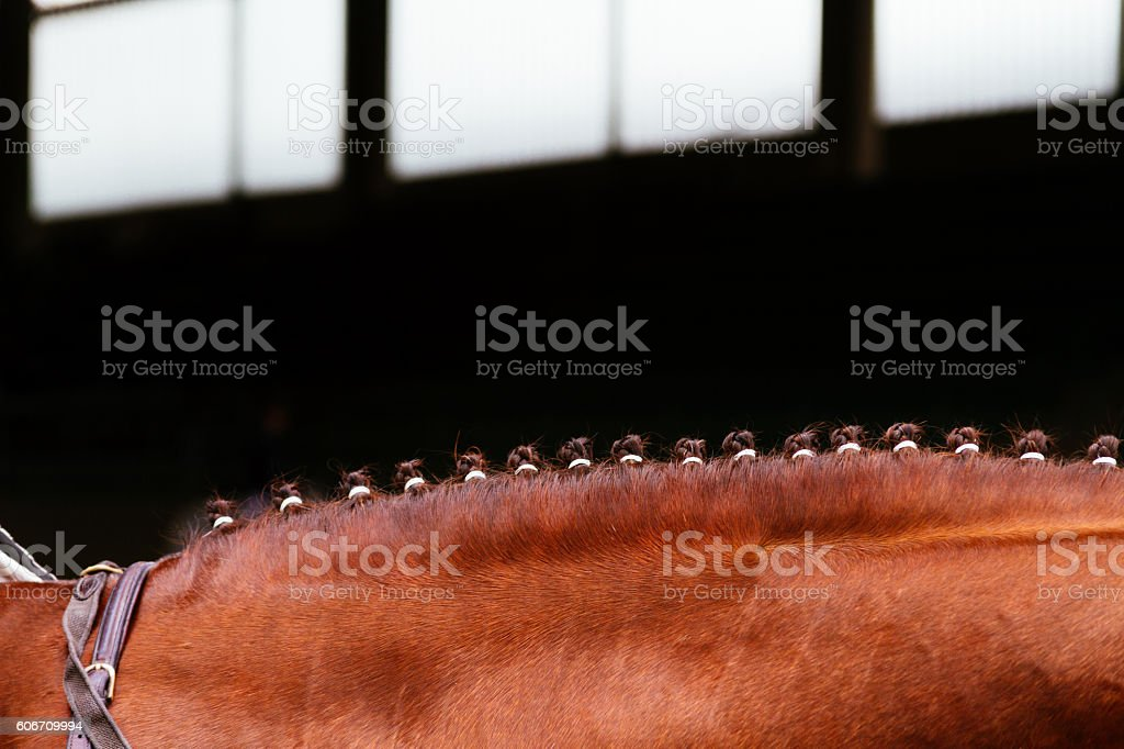 Brown horse mane tied with small braids stock photo