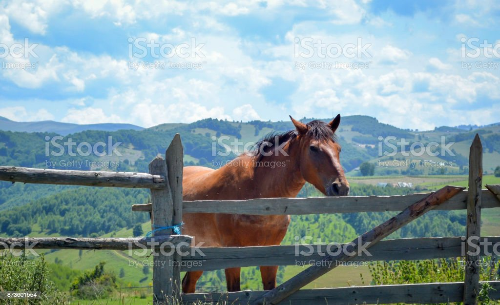 Brown horse on a mountain pasture behind an old wooden fence on the background of a blue sky and mountain peaks stock photo