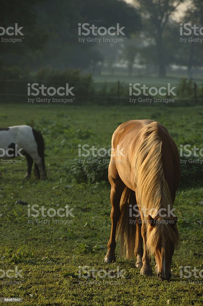 brown horse on early morning royalty-free stock photo