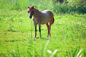 brown horse on the green  sunny meadow