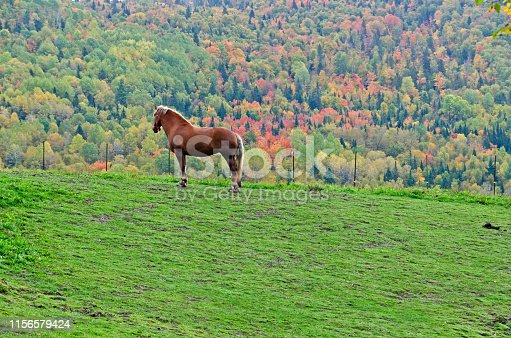 Brown horse on colorful trees background