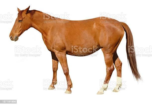 Brown horse picture id157191956?b=1&k=6&m=157191956&s=612x612&h=ctoggmxjabmri p6xt3qfuonl3yywid1h109 rovirw=