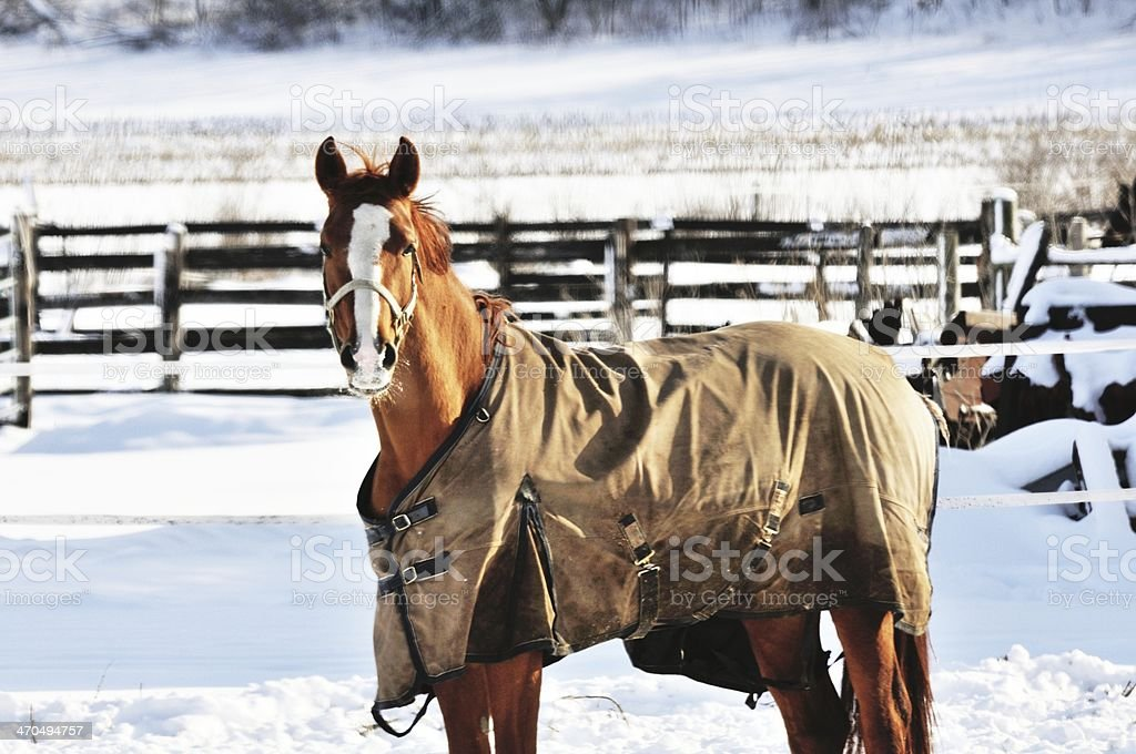 Brown Horse stock photo