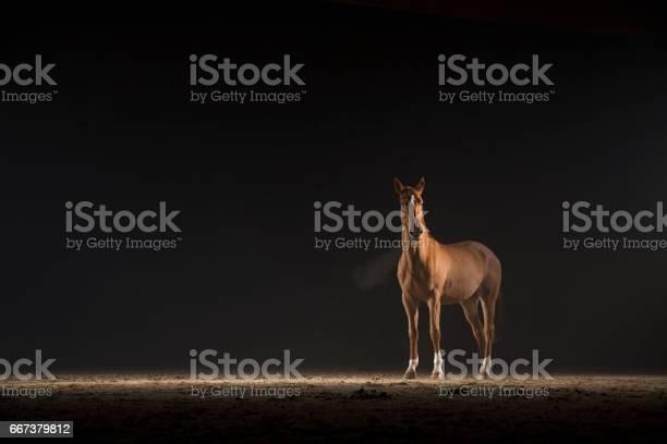 Brown horse picture id667379812?b=1&k=6&m=667379812&s=612x612&h=c7f6ycl9gbjpkmcbzllk6n3fbi9m0exh gtxlay6mwq=