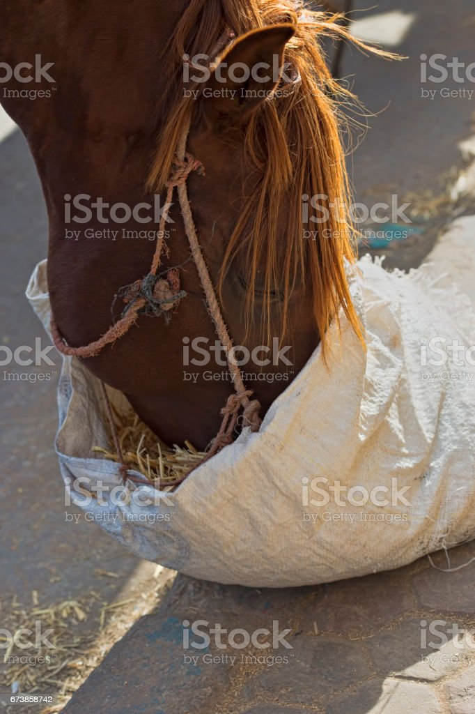 Brown horse photo libre de droits