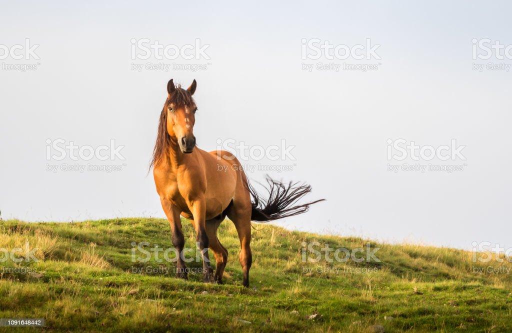 棕色的馬在夏天的陽光下擺姿勢。野生景觀與馬在夏季進入山區。 - 免版稅動作圖庫照片
