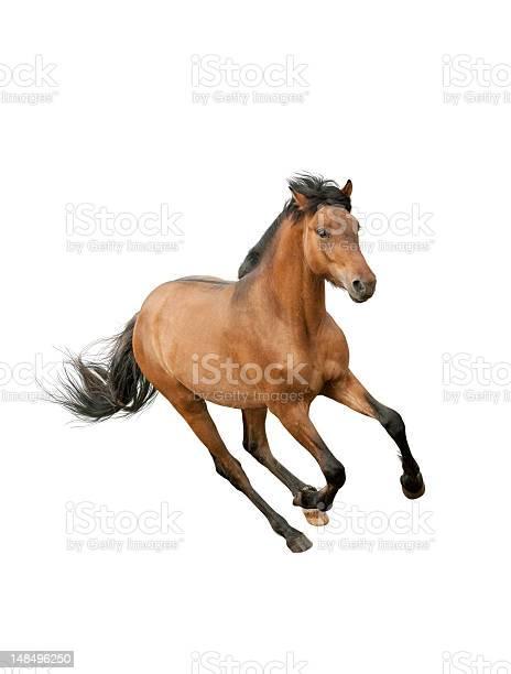 Brown horse running on a white background picture id148496250?b=1&k=6&m=148496250&s=612x612&h=vcmxpfbkwvfnk8qb8qsvqlhm9w0w0k5dlurb2rc3bgg=