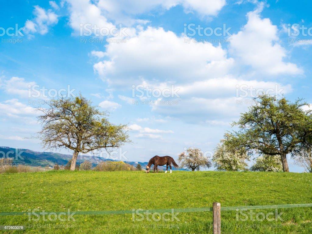 Braune Pferd stehen auf einer Wiese im ländlichen Deutschland – Foto