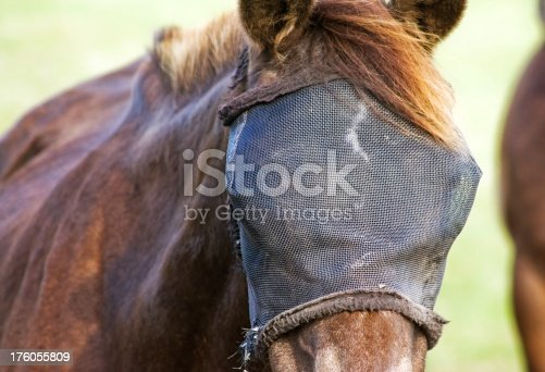 brown horse with a fly cover