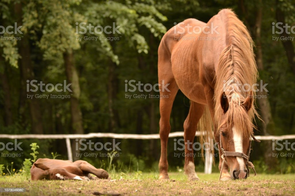 Brown Horse With Its Baby Stock Photo Download Image Now Istock