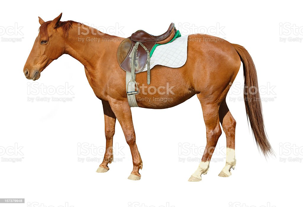 Brown Horse with Saddle stock photo