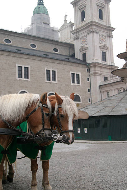 Brown Horses in Austria stock photo