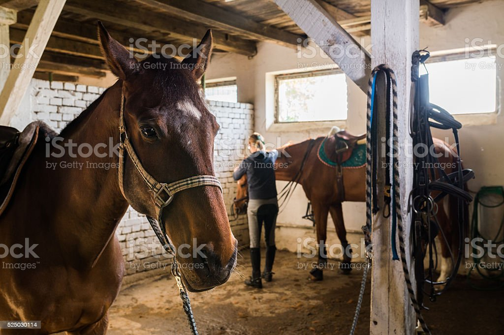 Brown horses in the stable stock photo