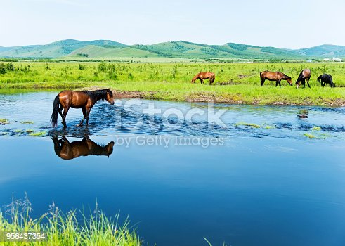 Brown horses on a bank