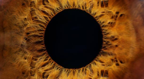 Brown human eye macro Beautiful brown human eye very close-up macro photography iris eye stock pictures, royalty-free photos & images