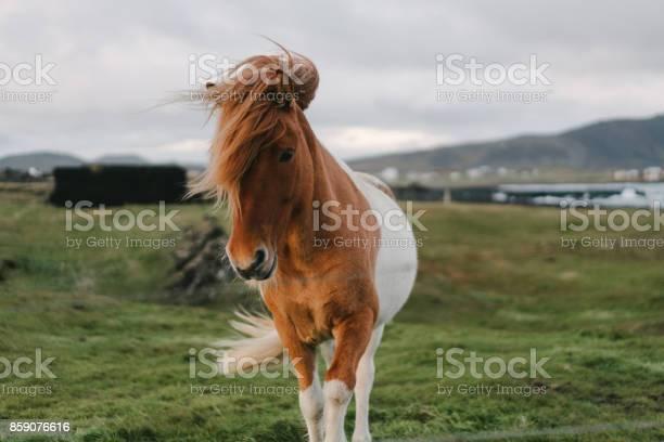 Brown icelandic horse on the meadow picture id859076616?b=1&k=6&m=859076616&s=612x612&h=kmaz9gxehwuzegm8rtgoxregxu3jvwoktu yn3ler6k=