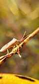 Beautiful insect