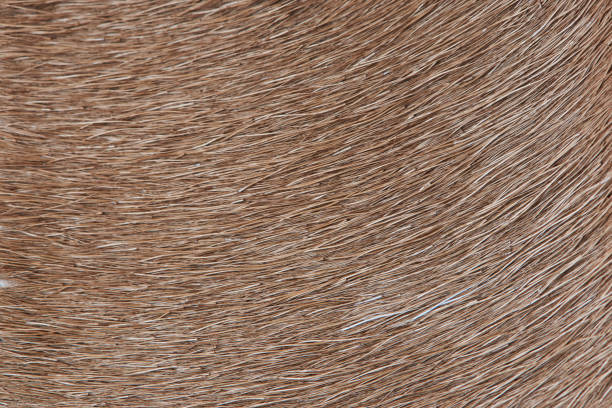 Brown lama fur background stock photo