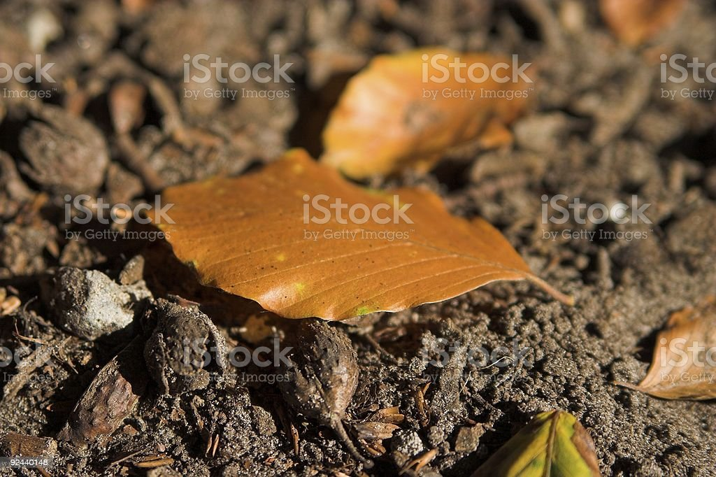 Brown leaf lying on the ground royalty-free stock photo