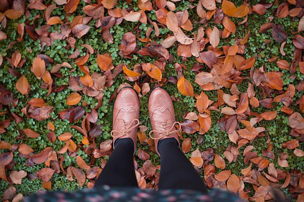 Brown leaf under my feet stock photo
