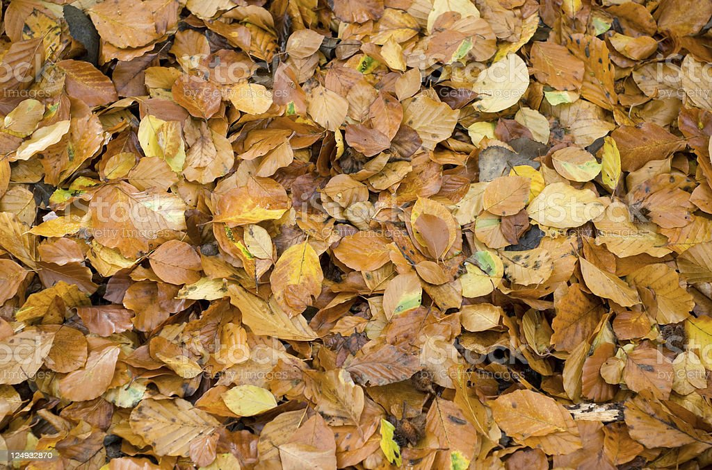 Brown Leafs Wallpaper Background Fall Autumn Stock Photo Download Image Now Istock