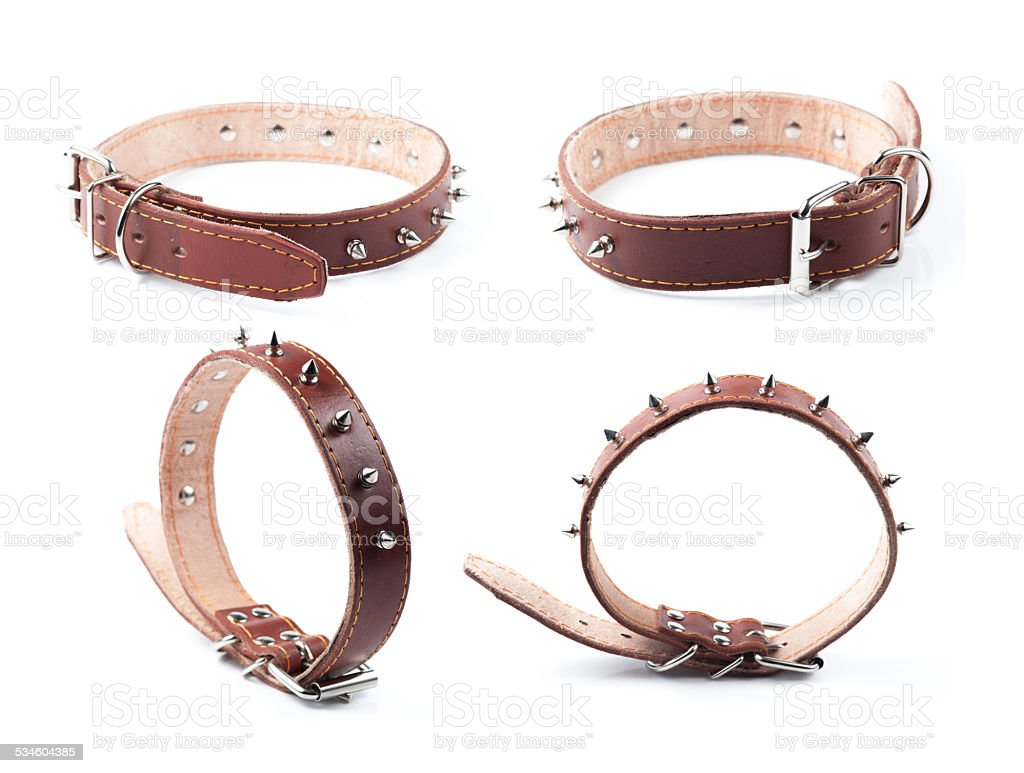 brown leather collar with rivets stock photo