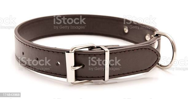 Brown leather dog collar with metal accents picture id174843968?b=1&k=6&m=174843968&s=612x612&h=1rw7gvtvewebki5xpsz22wms0hgafuapm9seups5f5q=