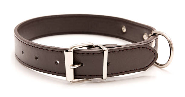 A brown leather dog collar with metal accents Leather dog collar isolated on a white background. It is dark brown in colour and has a metal buckle. It cane used to attach a leash for walkies and to include pet name tag. collar stock pictures, royalty-free photos & images