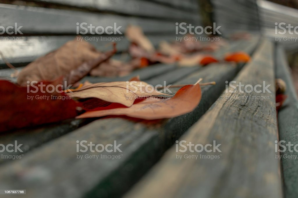 Brown Leaves on a Green Bench - foto stock