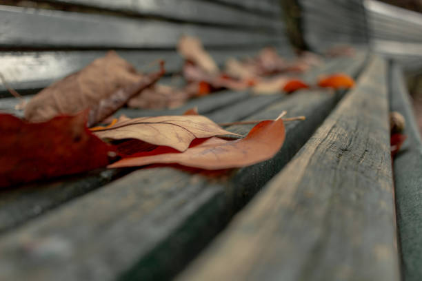 brown leaves on a green bench - monica pirozzi foto e immagini stock