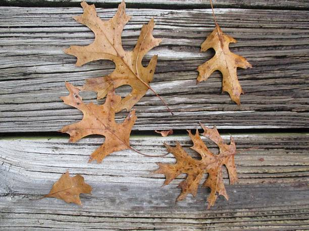 Brown Leaves on the Floor of a Deck in Fall stock photo
