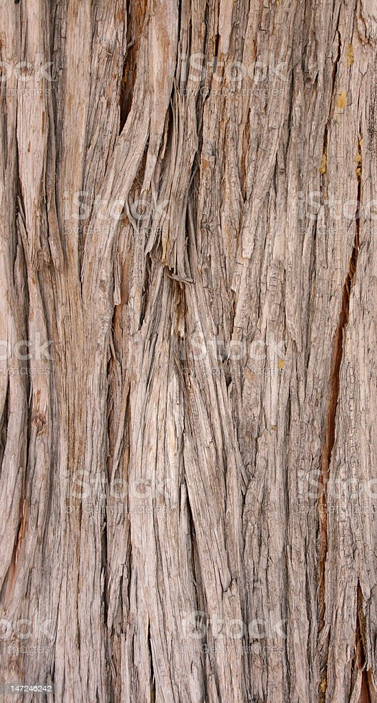 brown lineated bark stock photo