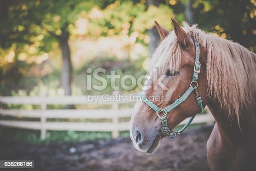 Portrait of a beautiful brown male horse at sunset in autumn season