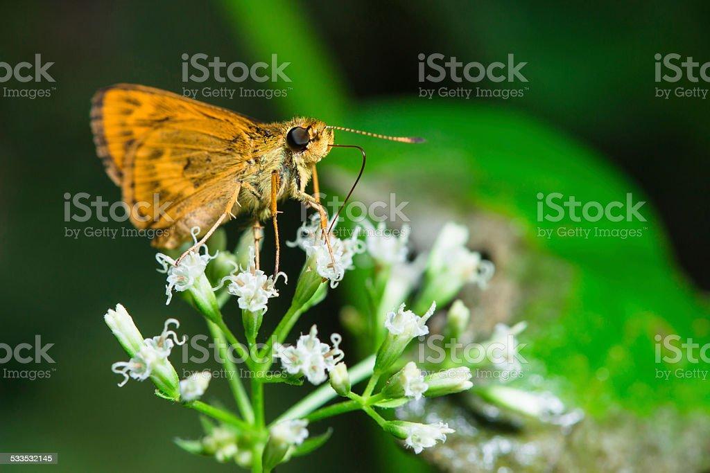 Brown moth stock photo