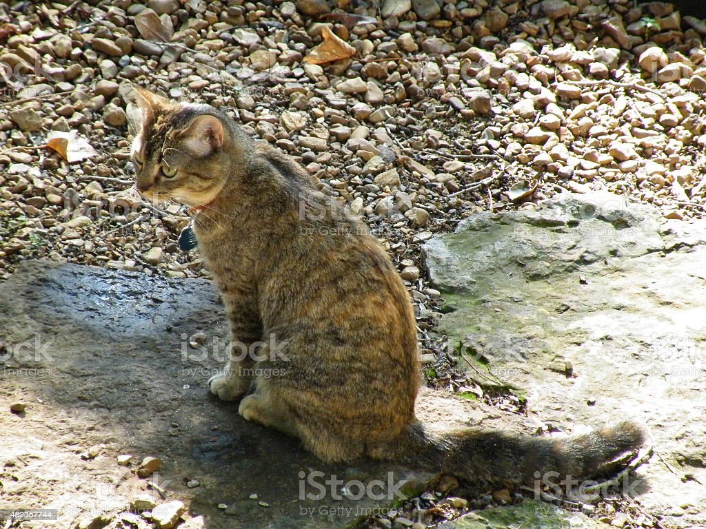 Brown nose tabby cat sitting on a rock stock photo