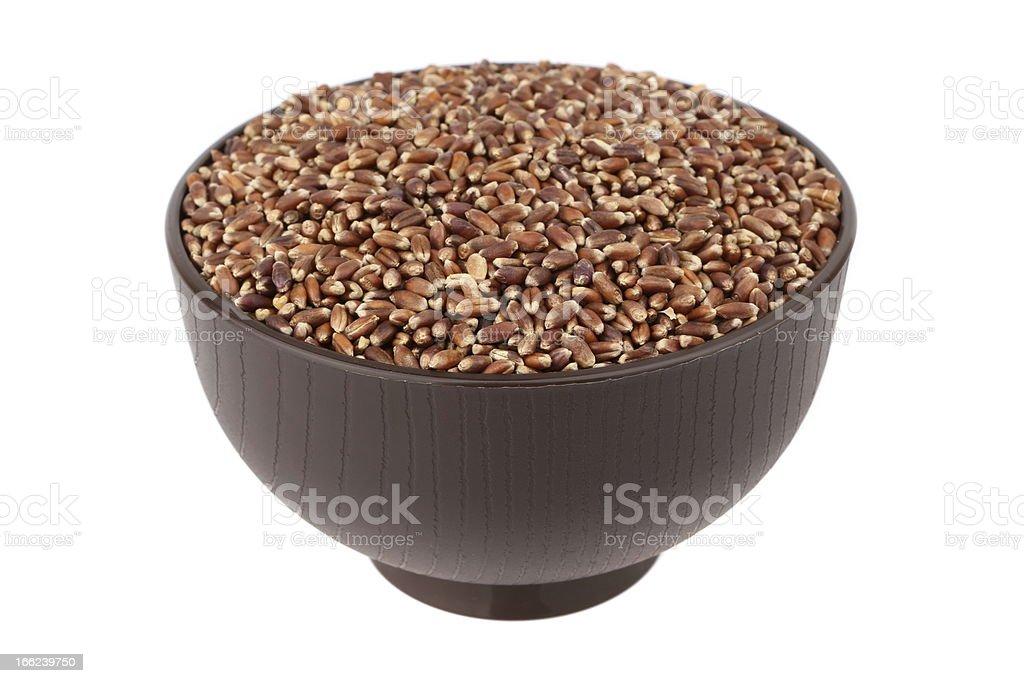 brown oat grain royalty-free stock photo
