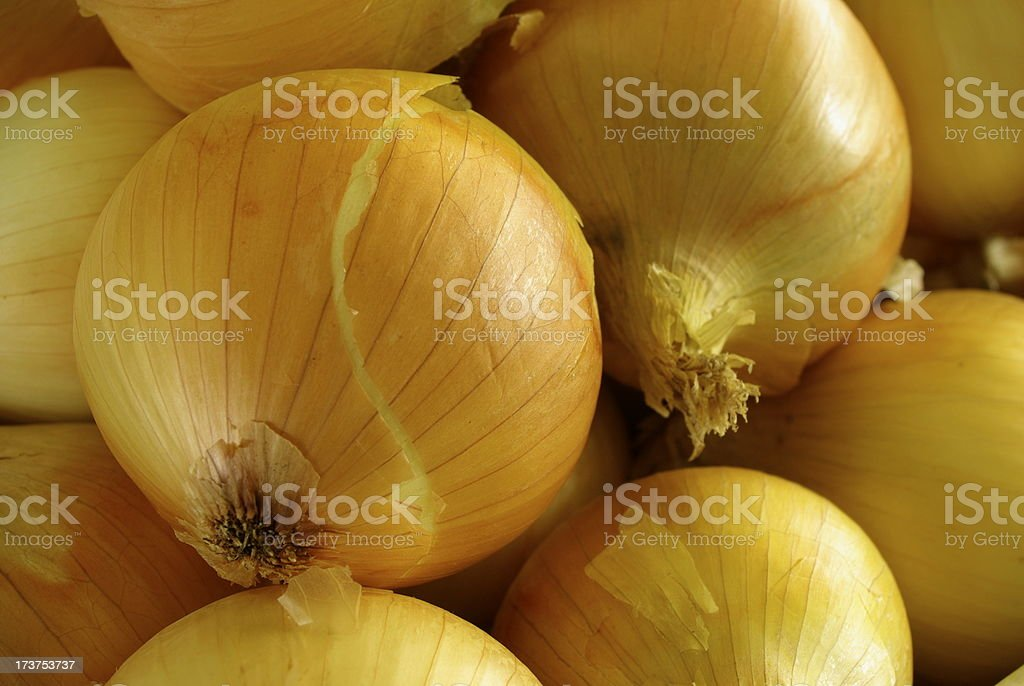 Brown Onions stock photo