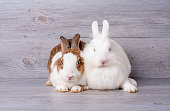 Brown pattern and white bunny rabbit lie down on gray background together and they look relax.