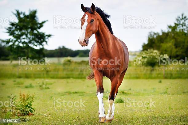 Photo of Brown pedigree horse