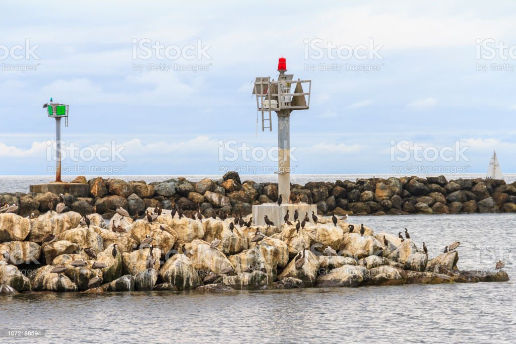 Brown Pelicans And Cormorants Sitting On Rock Jetty In Southern California,  Making Quite A  Mess stock photo