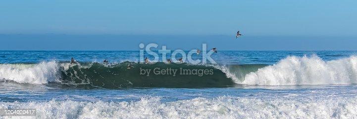istock Brown pelicans flying 1204020417