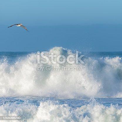 istock Brown pelicans flying 1205095740
